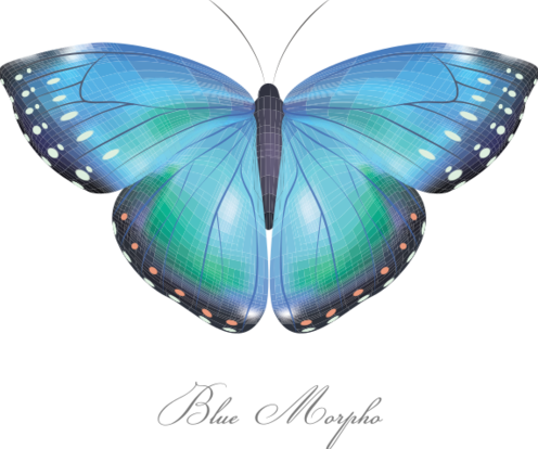 Blue morpho tisorton2